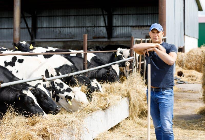 Farmer στο αγρόκτημα με τις γαλακτοκομικές αγελάδες στοκ εικόνες