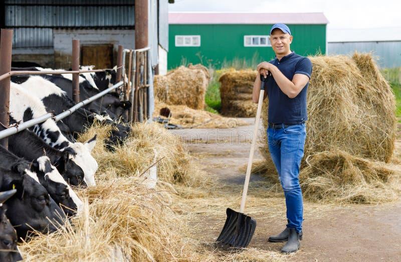 Farmer στο αγρόκτημα με τις γαλακτοκομικές αγελάδες στοκ φωτογραφίες