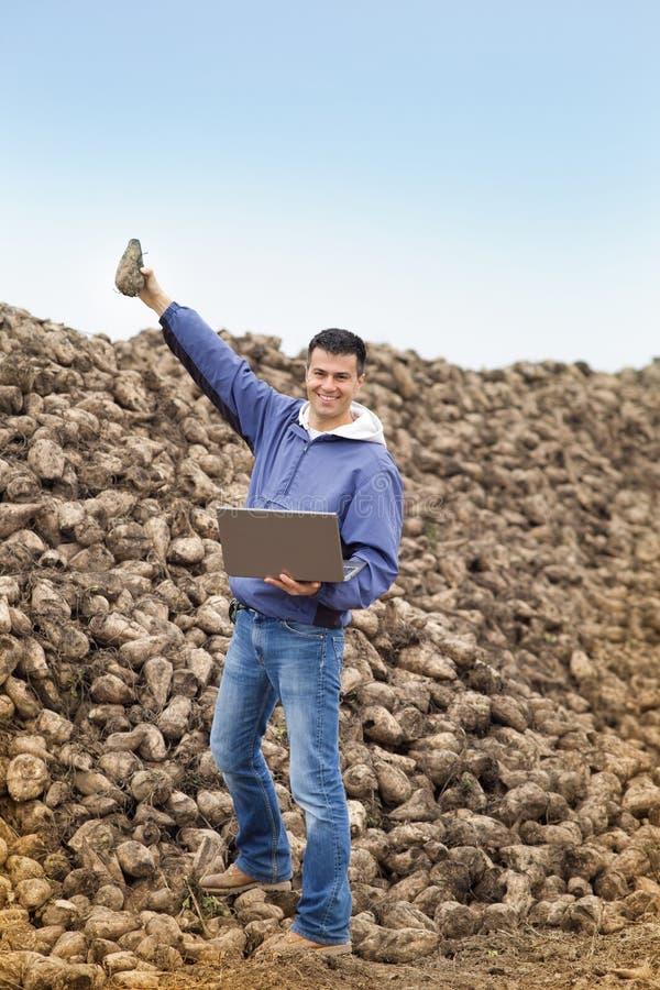 Farmer στο σωρό σακχαρότευτλων στοκ εικόνα