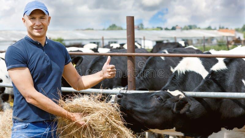 Farmer που λειτουργεί στο αγρόκτημα με τις γαλακτοκομικές αγελάδες στοκ εικόνα με δικαίωμα ελεύθερης χρήσης