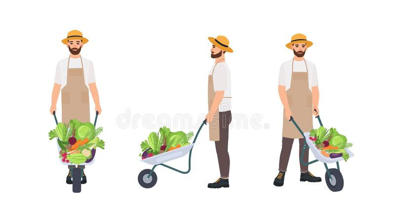 Farmer or agricultural worker pulling wheelbarrow full of gathered crops. Male cartoon character isolated on white royalty free illustration