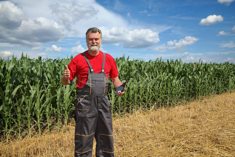 Farmer or agronomist in green corn field royalty free stock image