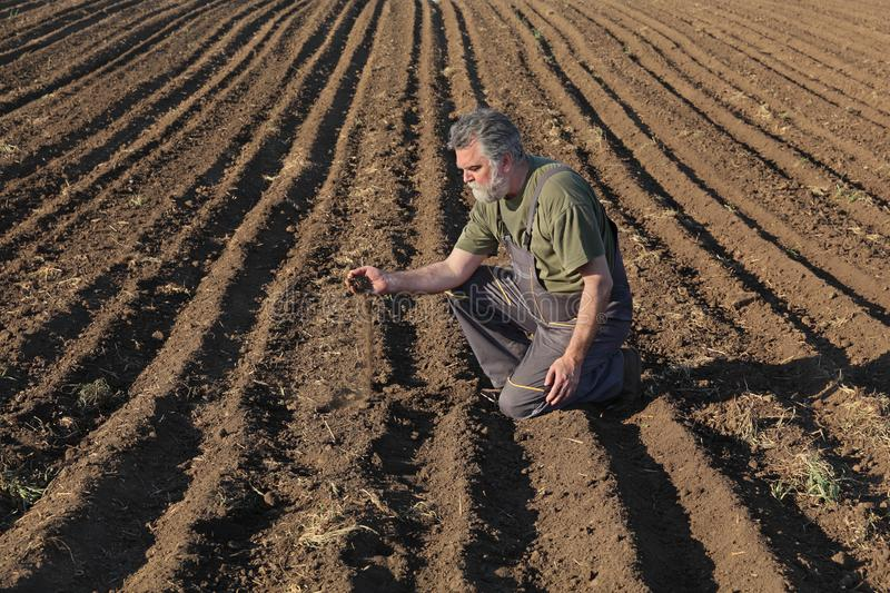 Farmer or agronomist inspecting cultivated field. Agriculture, farmer or agronomist examining quality of soil in field, and pouring it from hand royalty free stock images