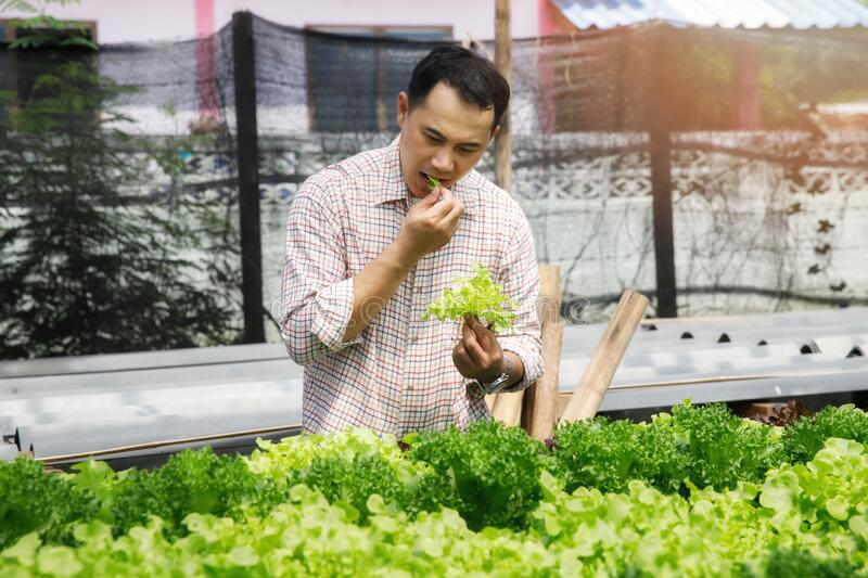 A farmer ate fresh salad vegetables from the nursery to show that his vegetables were not contaminated with chemicals.  stock photos
