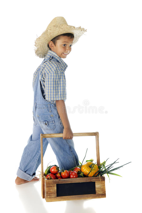 Farmer Boy with Veggies. An adorable farm boy carrying a wooden basket filled with fresh veggies. On a white background royalty free stock image