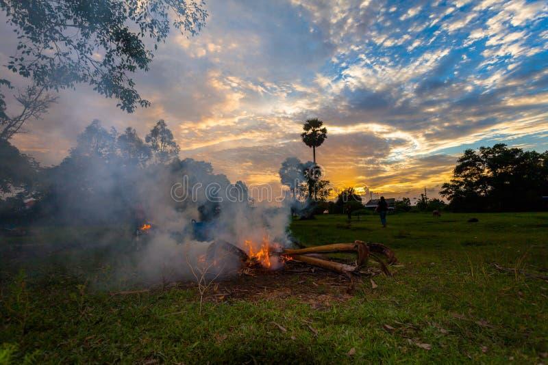 farmer burn fire to make smoke for protect his buffalo stock photo