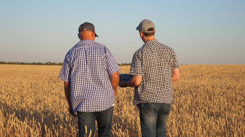 Farmer and businessman with tablet working as a team in field. agronomist and farmer are holding a grain of wheat in royalty free stock photography