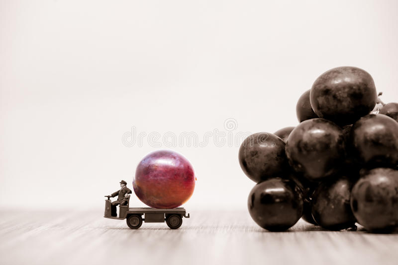 Farmer carrying raspberries red grape. Macro photo royalty free stock photos