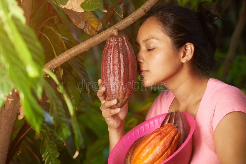 Farmer checking cacao plant royalty free stock photos