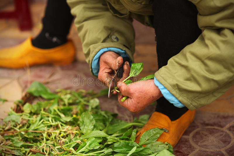 Farmer cleaning salad at the market in Asia stock images