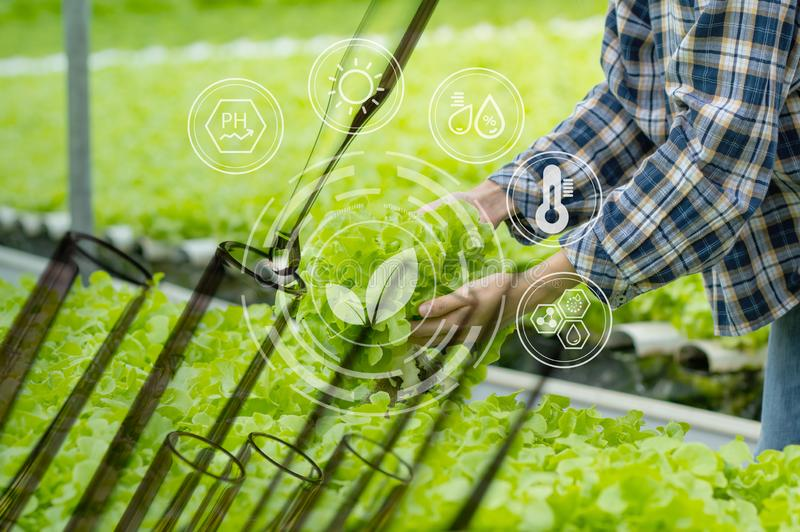 Farmer collect hydroponics vegetables and test tube to improve natural organic plant growth royalty free stock photography