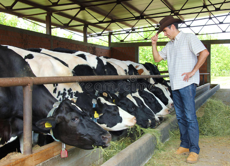 Farmer and Cows royalty free stock photos