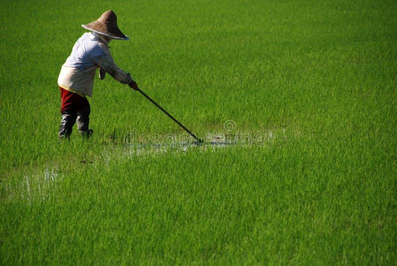 Farmer cutting grass stock photos