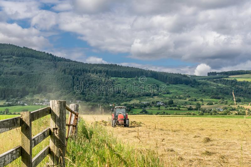 A tractor harvesting the crops on a summers day. A farmer driving his tractor on a hot sunny day in a field of wheat or hay. a forest and hill in the background stock photo