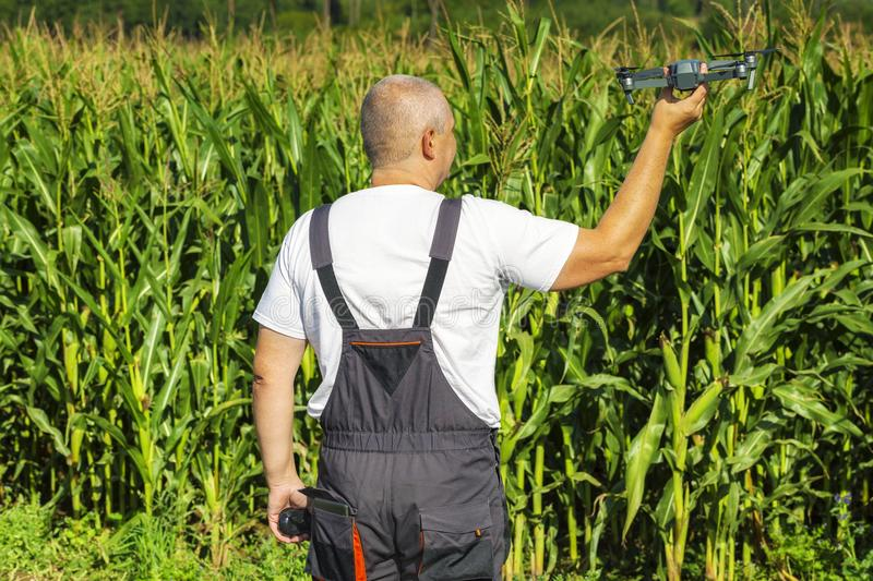 Farmer with drone and walkie talkie at corn field. In summer day stock image
