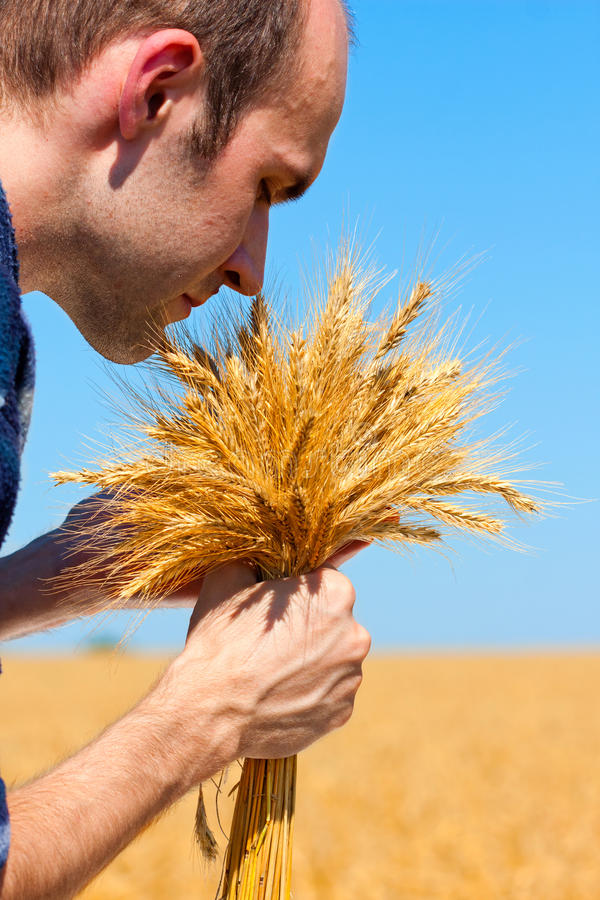 Download Farmer with ears stock photo. Image of reap, field, hills - 20350400