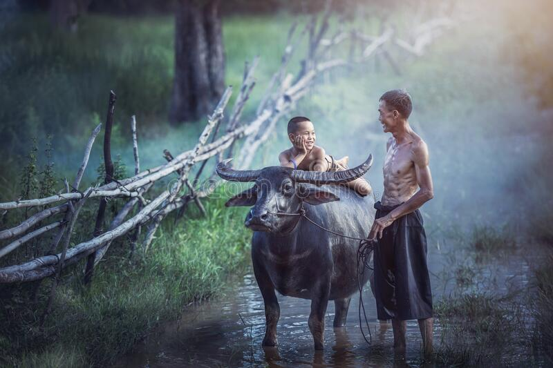 Farmer family, Father and son with a buffalo this lifestyle royalty free stock photo
