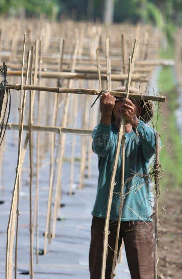 Download Farmer editorial image. Image of farmer, melon, bamboo - 35268390