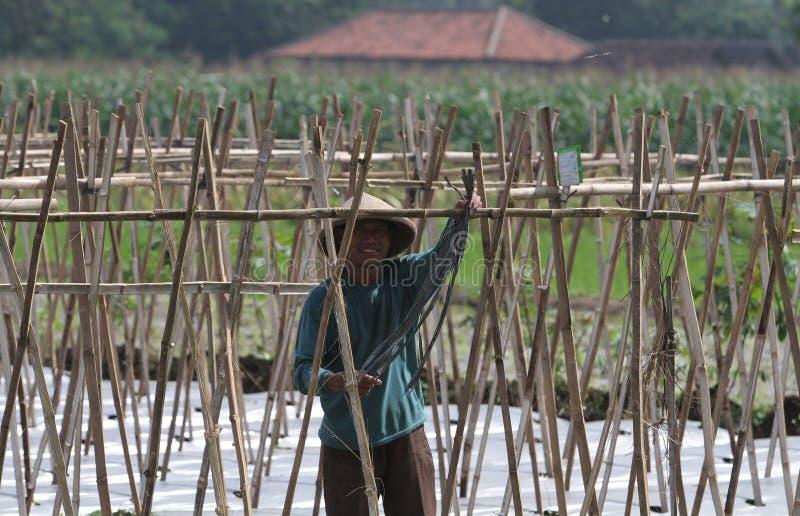 Download Farmer editorial photo. Image of boyolali, prepare, indonesia - 35268441