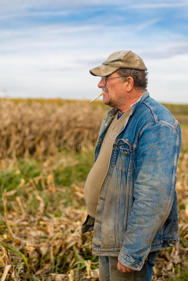 Farmer on the field, corn royalty free stock photography