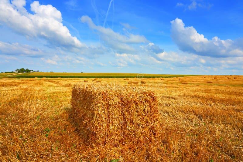 Farmer field stock images
