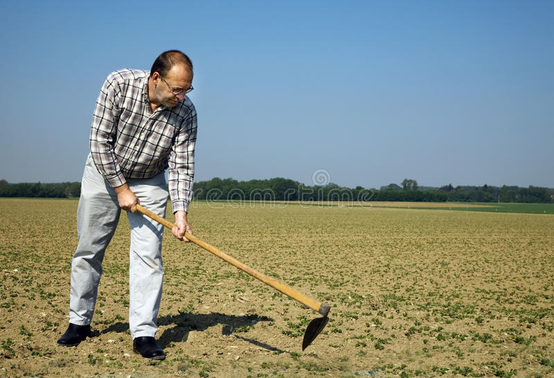 Download Farmer On The Field With Young Plants Stock Photo - Image: 19574120