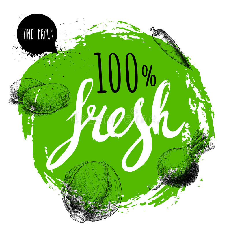 Farmer 100% fresh veggies design template. Green rough circle with hand painted letters. Engraving sketch style vegetables. royalty free illustration
