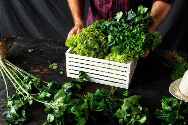 Farmer freshly herbs wooden box dark wooden table Harvesting con. Farmer with freshly herbs in wooden box on dark wooden table. Harvesting concept stock images