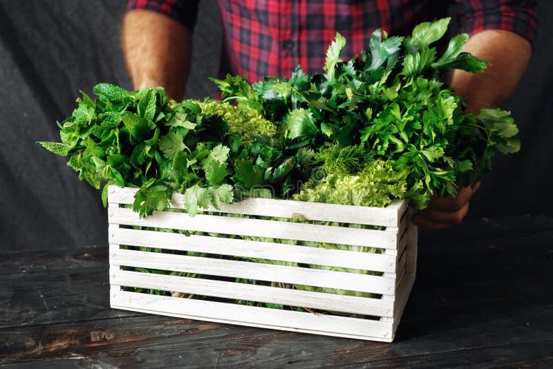 Farmer freshly herbs wooden box harvesting concept. Farmer with freshly herbs in wooden box harvesting concept stock image
