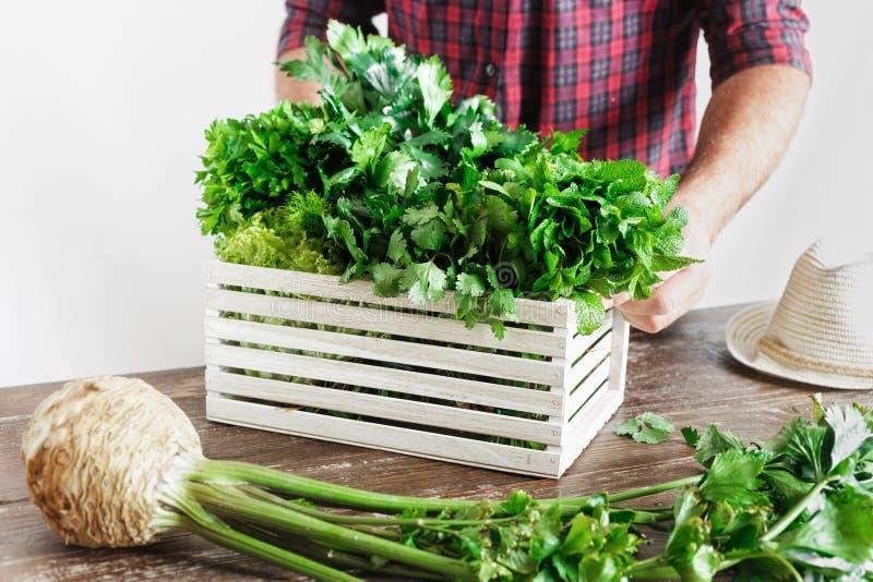 Farmer freshly herbs wooden box wooden table Harvesting. Farmer with freshly herbs in wooden box on wooden table close up Harvesting concept stock photo