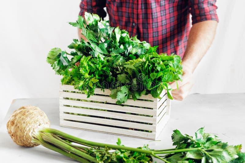 Farmer freshly herbs wooden box white table Harvesting. Farmer with freshly herbs in wooden box on white table. Harvesting concept stock image