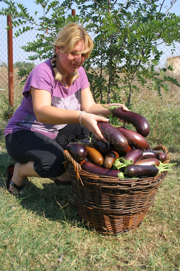 Download Farmer girl stock photo. Image of healthy, happy, food - 21229616