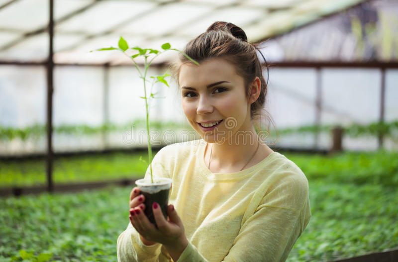 Farmer girl holding green seedlings in sunny greenhouse royalty free stock photo