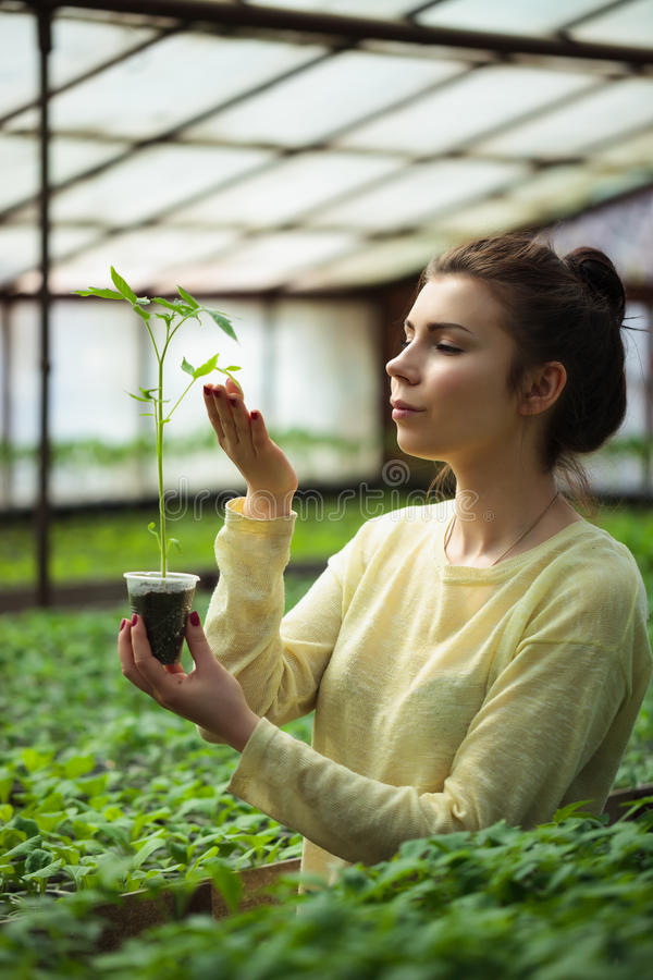 Farmer girl holding green seedlings in sunny greenhouse royalty free stock image