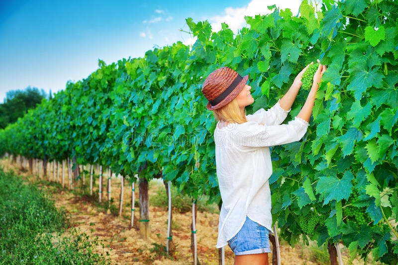 Farmer girl on vineyard. Farmer girl on Italian vineyard, cultivate grape, enjoying fruit harvest, agricultural field, winery industry, farming and agriculture royalty free stock photos