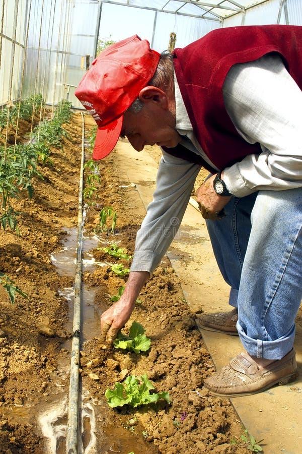 farmer greenhouse στοκ εικόνες