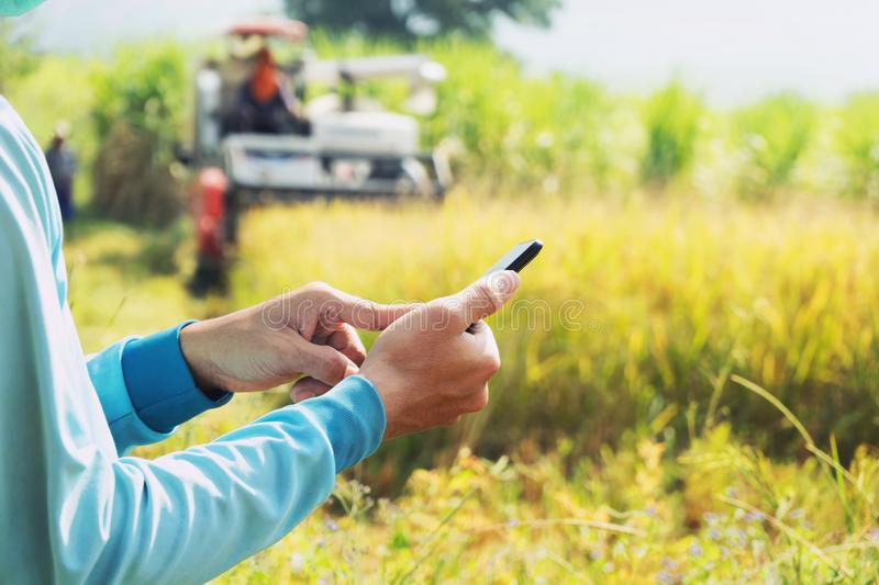 Farmer hand using mobile phone. agriculture concept royalty free stock images