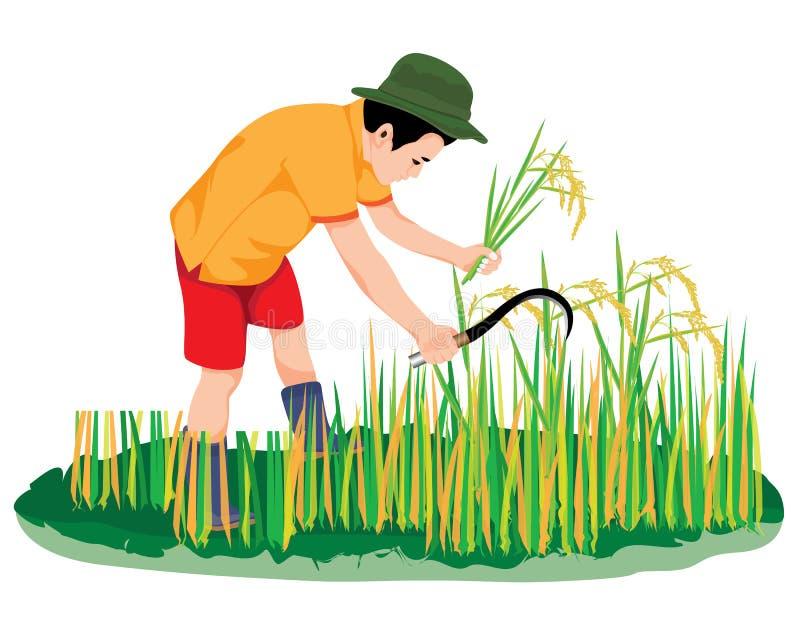 Vector Art - Farmer harvest rice in flood vector design. Clipart Drawing  gg105703621 - GoGraph