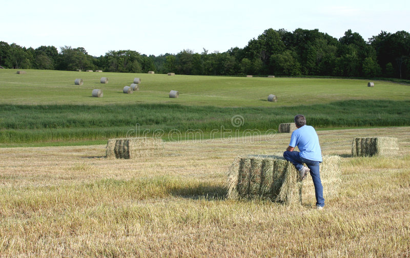 Farmer on a harvested field. Man looks over a field of hay bales stock images
