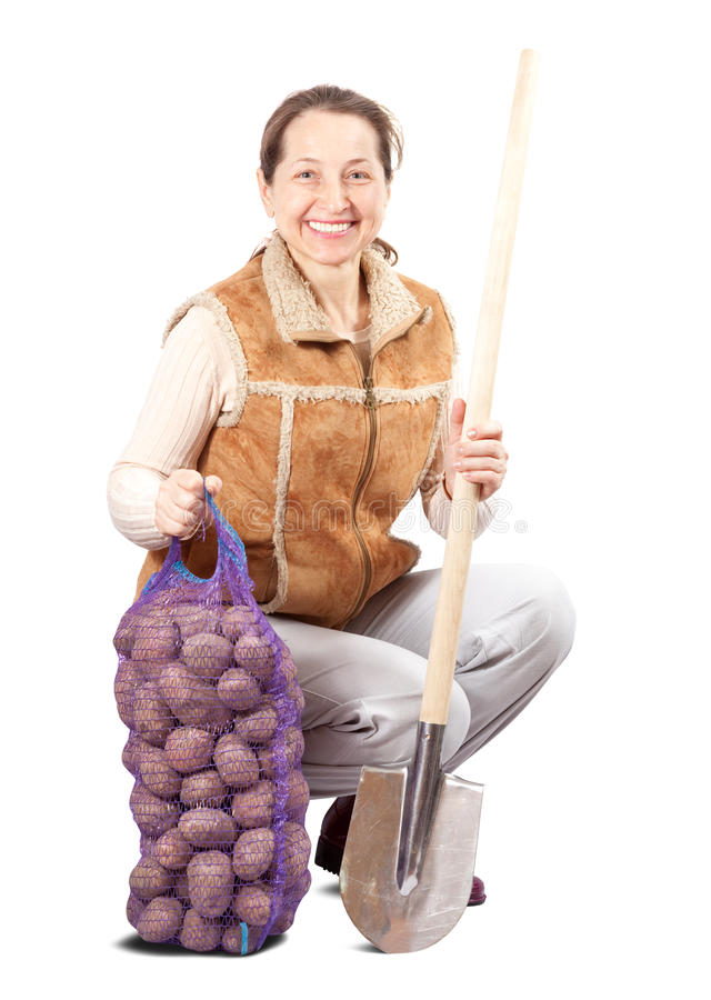 Farmer with harvested potatoes and spade. Female farmer with harvested potatoes and spade over white stock images