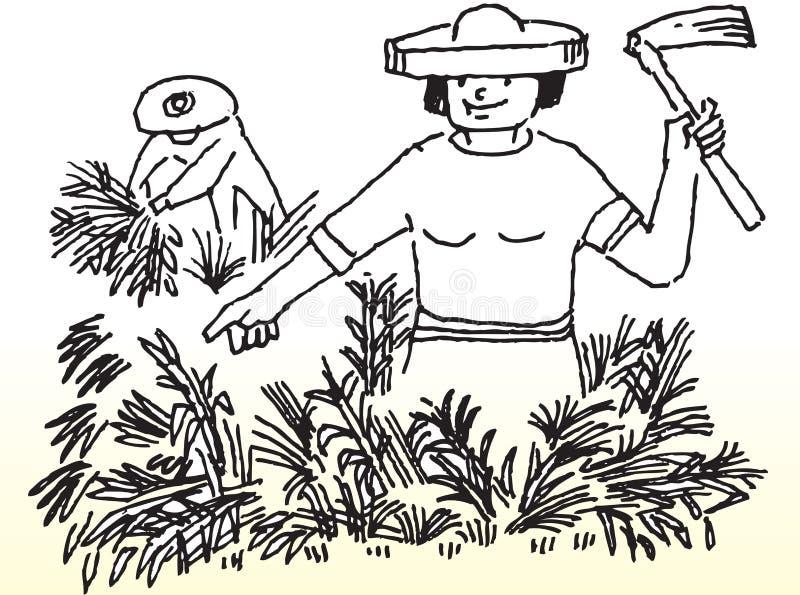 Farmer harvesting stock illustration