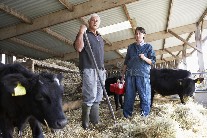 Farmer Having Discussion With Vet royalty free stock images