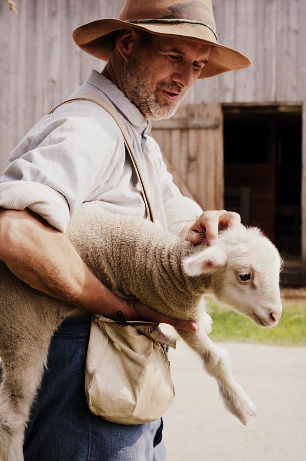 Farmer Holding Baby Lamb. A farmer holding a new baby lamb stock photo