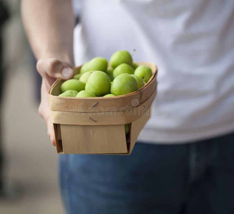 Farmer holding a basket of fresh Green plums stock photos