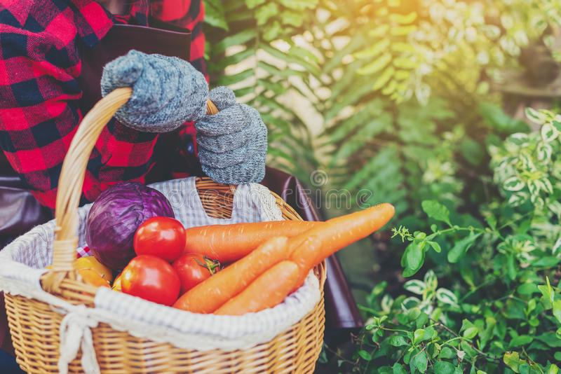 Farmer holding basket of fresh tomatoes, carrots,cabbage at farm outdoor. Food, vegetables, agriculture, organic food.  royalty free stock photo