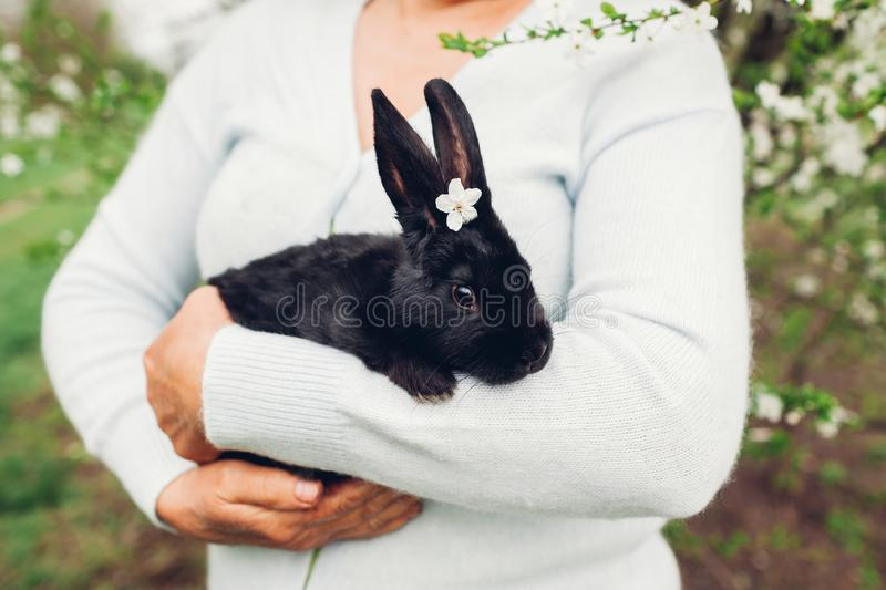 Farmer holding black rabbit in spring garden. Little bunny with flowers on head sitting in hands royalty free stock photography