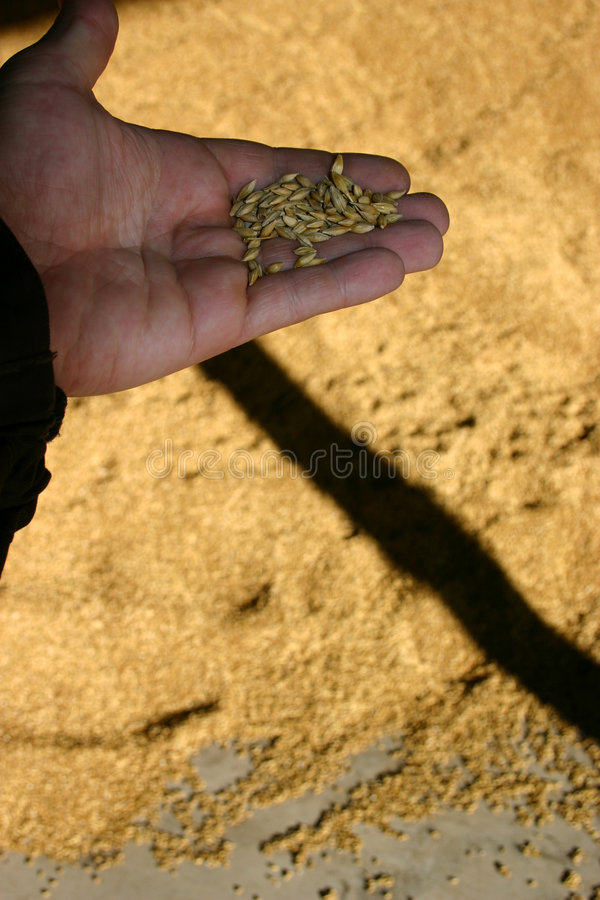 Download Farmer Holding Grain Royalty Free Stock Photo - Image: 2009605