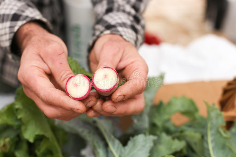 Farmer holding radish royalty free stock photography