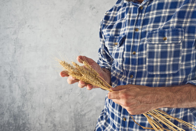 Farmer holding wheat ears stock photography