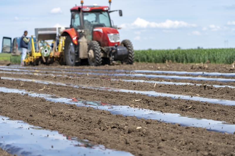 Farmer Installing Drip Tape Irrigation Under Plastic Mulch on a Vegetable Bed. Tractor with agricultural equipment in the same pass dispenses fertilizer, lays royalty free stock photo